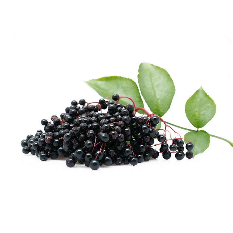 Elderberry powdered extract/Elderberry powder