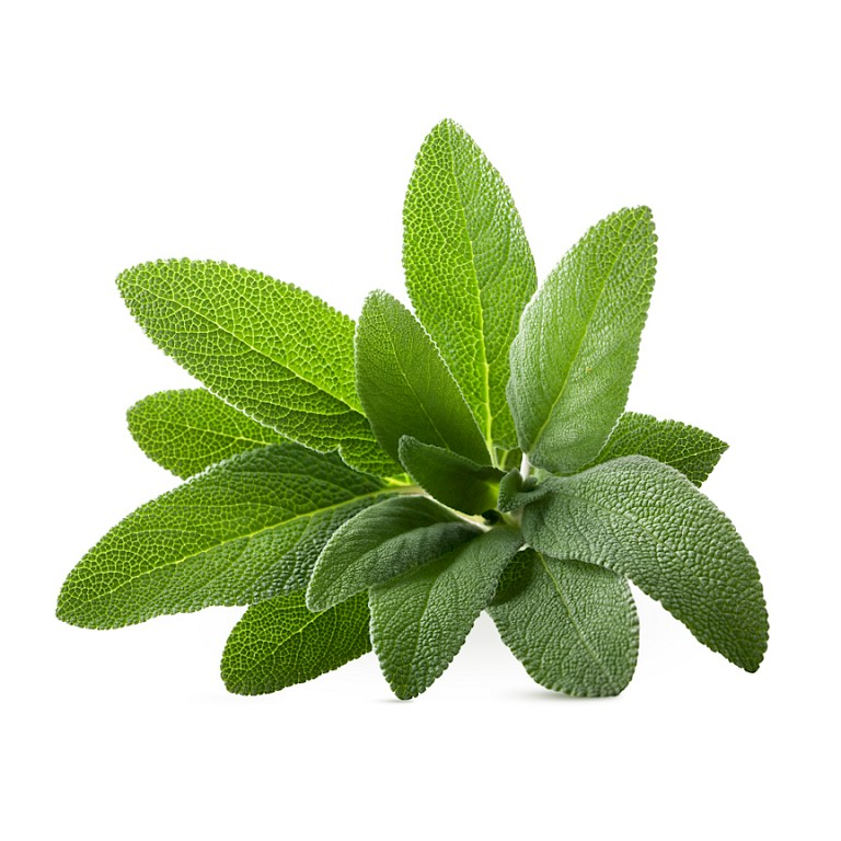 Sage leaf powdered extract