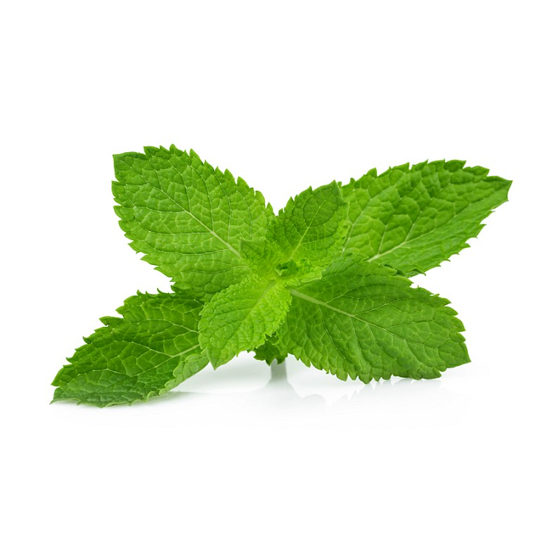 Lemon balm leaf powdered extract